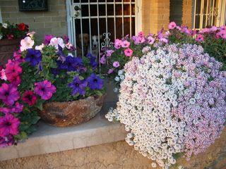 Plants help outdoor air, too...