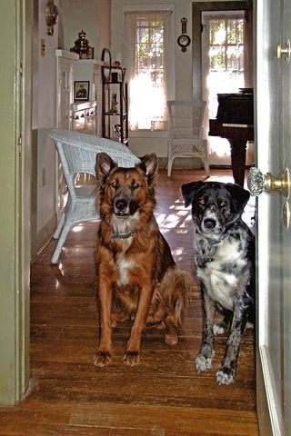 Rufus and Naomi, in my music room