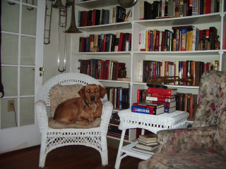 Elmer - not reading, just waiting for the TV.